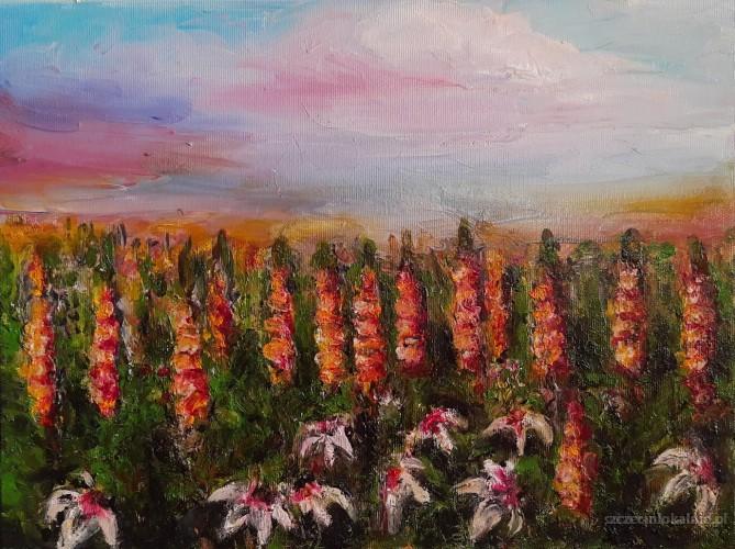 Kwiaty polne – Łubin